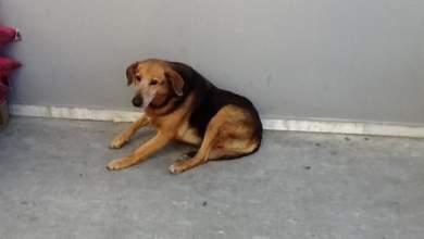 Ο «Χάτσικο» της Κρήτης: Ο σκύλος που περιμένει 7 χρόνια το αφεντικό του [ΒΙΝΤΕΟ]
