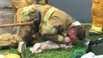 Πυροσβέστης σώζει κουτάβι με το «φιλί της ζωής»