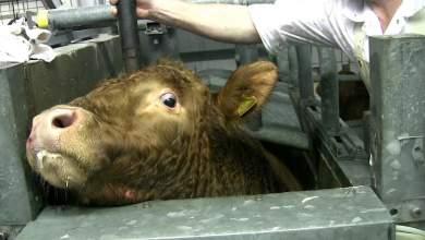 Υπογράψτε και σταματήστε το βασανισμό ζώων [ΒΙΝΤΕΟ]