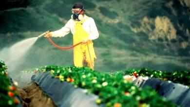 Βγάζουν «λάδι» τη Monsanto
