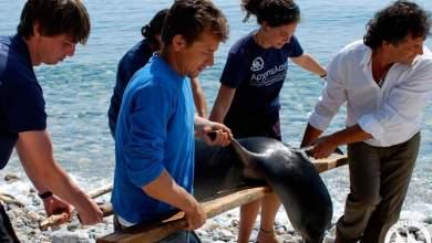 Αιγαίο - Η σφαγή των θαλάσσιων ειδών και η «ομερτά» της συγκάλυψης και του φόβου