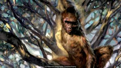 Ο χαμένος κρίκος στην αλυσίδα της εξέλιξης του ανθρώπου