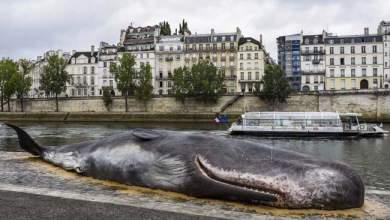 Νεκρή φάλαινα στις όχθες του Σηκουάνα αναστατώνει το Παρίσι