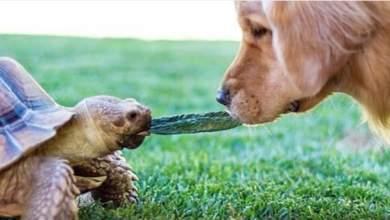 Χελώνα και σκύλος έγιναν οι καλύτεροι φίλοι [ΒΙΝΤΕΟ]