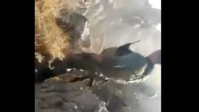 Κτηνωδία: Εκτέλεση μαχητριών της κουρδικής αντίστασης στην Αφρίν από τον τουρκικό στρατό [Βίντεο - Σκληρές εικόνες]