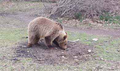 Αρκουδάκι βγήκε προς... πώληση στο διαδίκτυο έναντι 1.100 ευρώ