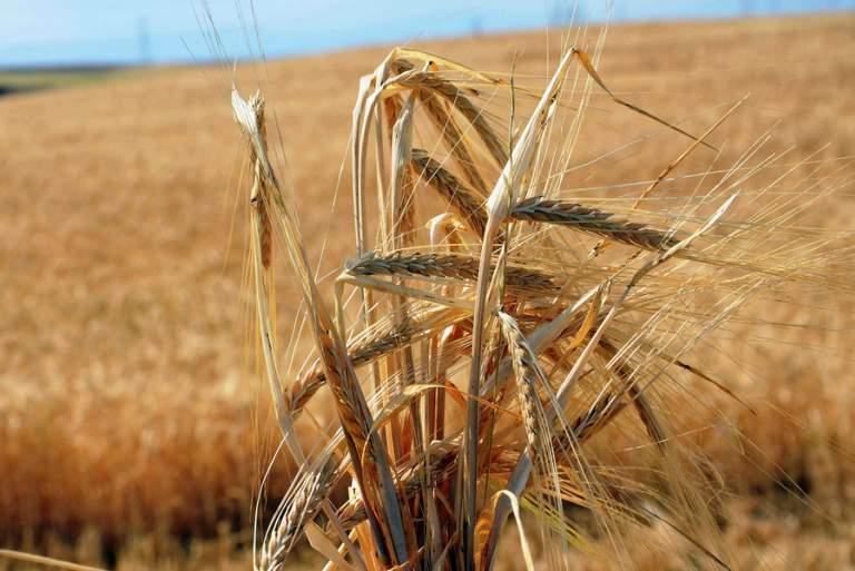To παράδειγμα της Θεσσαλίας: Με αυτό τον τρόπο χάθηκε η αγροτική αυτάρκεια της Ελλάδας