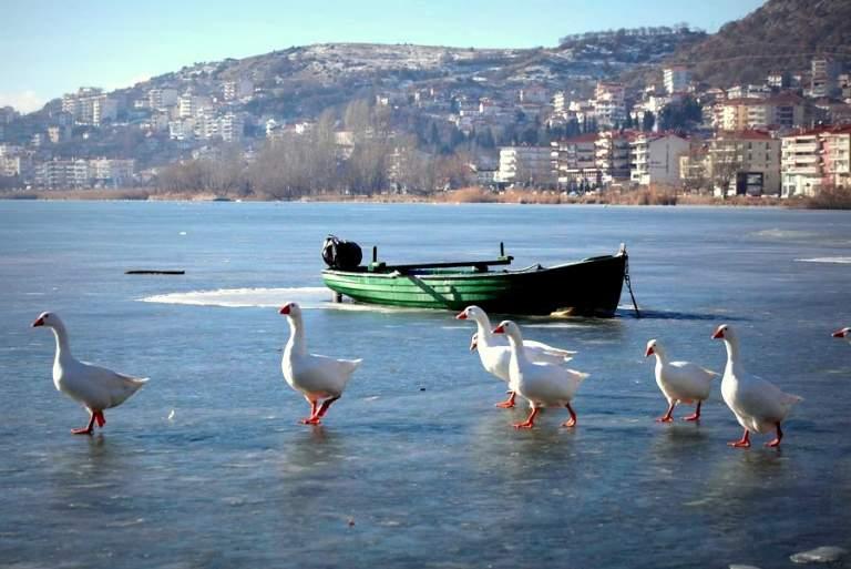 Πάπιες και κύκνοι έκαναν «πατινάζ» στην παγωμένη λίμνη της Καστοριάς [ΦΩΤΟΓΡΑΦΙΕΣ]