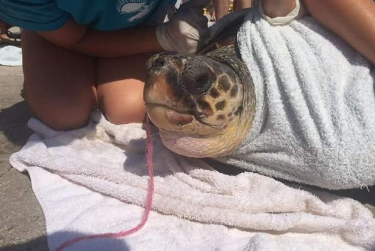 Εθελοντές βγάζουν δίχτυ από το στόμα χελώνας Caretta-Caretta [ΒΙΝΤΕΟ]