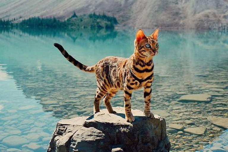 Η πιο πολυταξιδεμένη γάτα στον κόσμο [ΦΩΤΟ+ΒΙΝΤΕΟ]