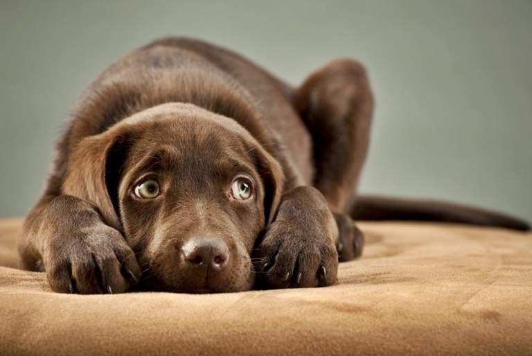 Πώς μας δείχνουν οι σκύλοι ότι φοβούνται